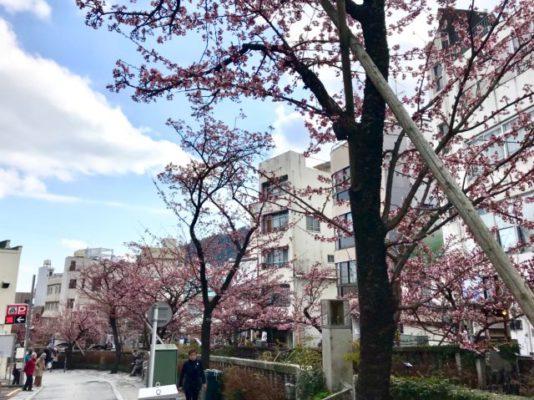 ランハート株式会社・糸川・熱海桜