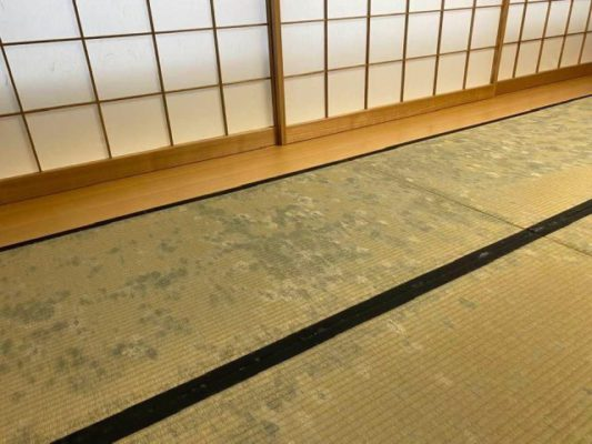 ランハート(株)・カビ・新畳・入替